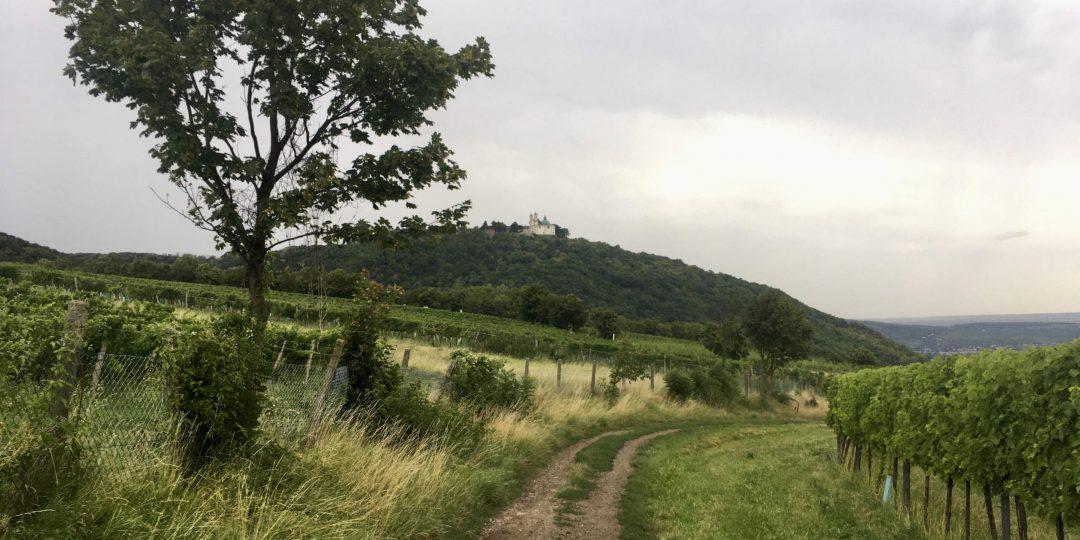 Weingärten mit Blick zum Leopoldsberg