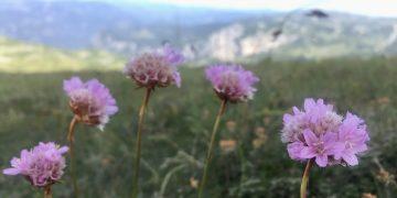 Nachhaltig und naturverträglich in die Berge
