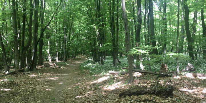 Im Naturpark Eichenhain, herrlich grün!