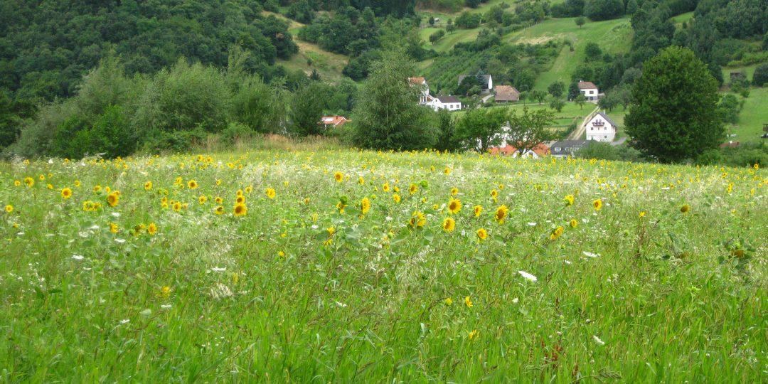 Naturatrail Etappe 1. Foto: Naturfreunde Österreich