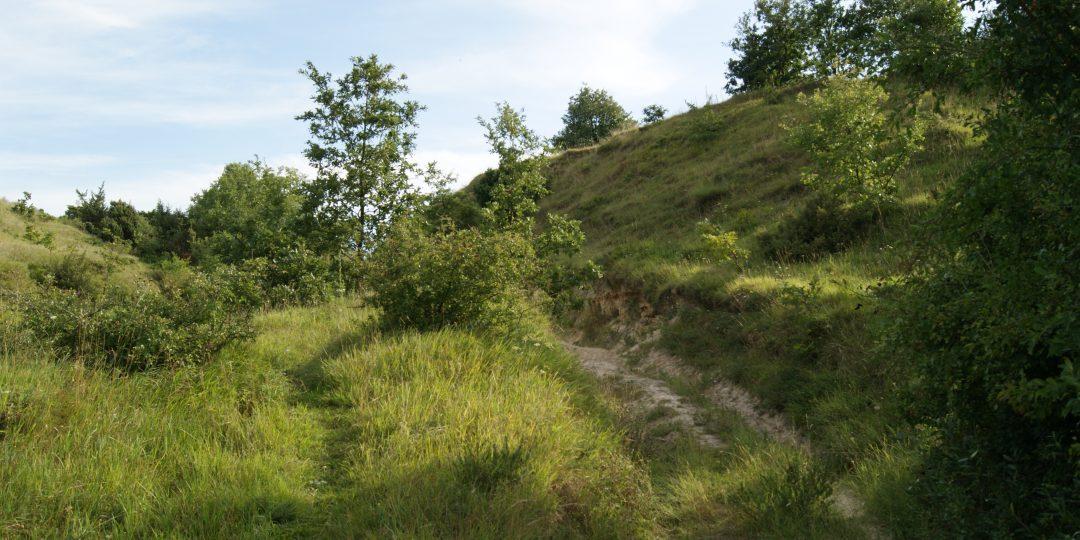 Natura Trail Etappe 2. Foto: Naturfreunde Österreich