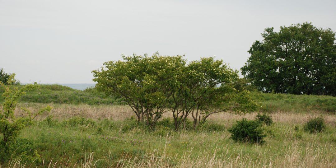 Natura Trail Bisamberg. Foto: Andrea Lichtenecker