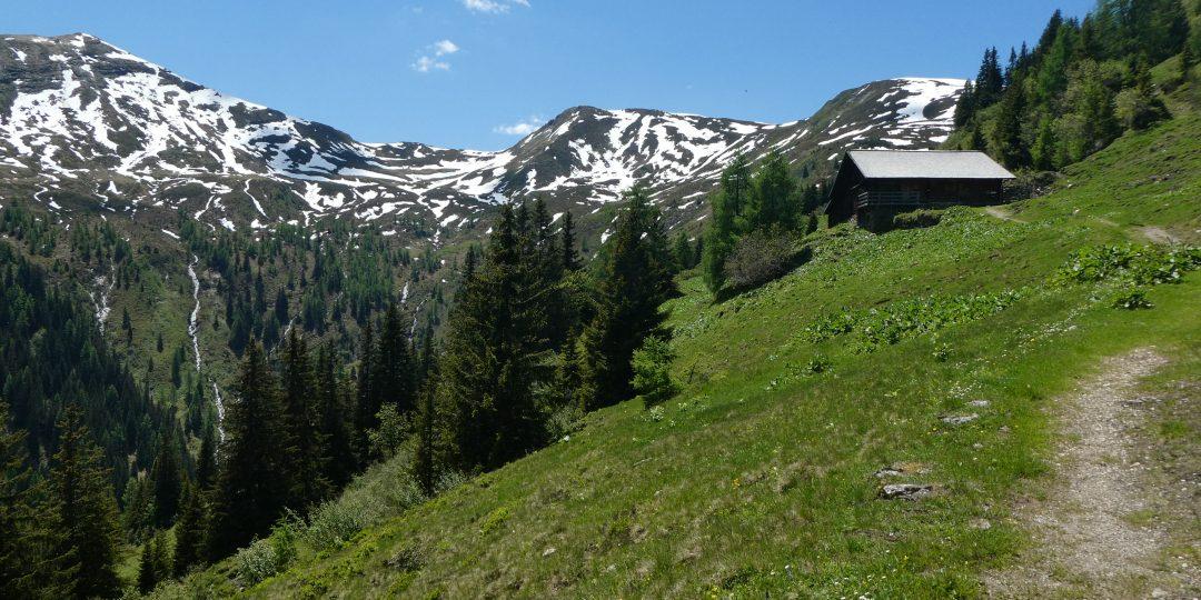 Tofernalm mit Kreuzkogel, Throneck und Finsterkopf. Die Tofernscharte ist rechts hinter dem Wald. Foto Karl Plohovich