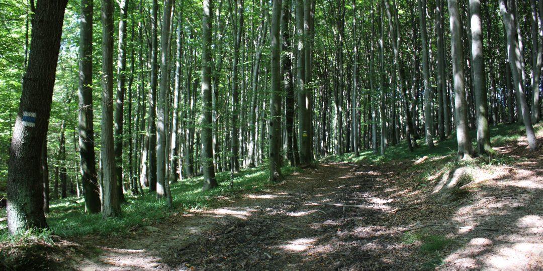 WohlfühlWeg: Der Wienerwald bei Rekawinkel. Foto: David Bröderbauer
